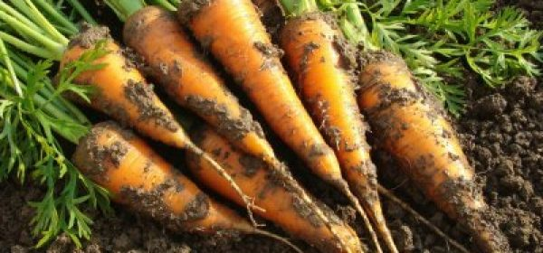 What Are the Best Plants for Your Fall Vegetable Garden