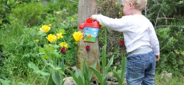 Beginner Gardening Tips – What You Need To Get Started