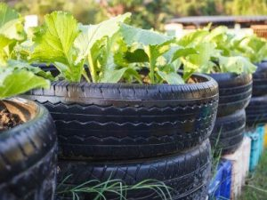 Stacked Vegetable Tire Planter