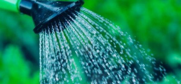 Watering Your Vegetable Garden – It's Not as Simple as You Think