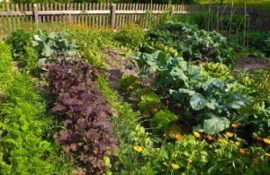 Tips to Starting a Vegetable Garden