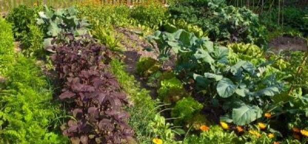 Tips to Starting a Vegetable Garden That Will Be Best for You